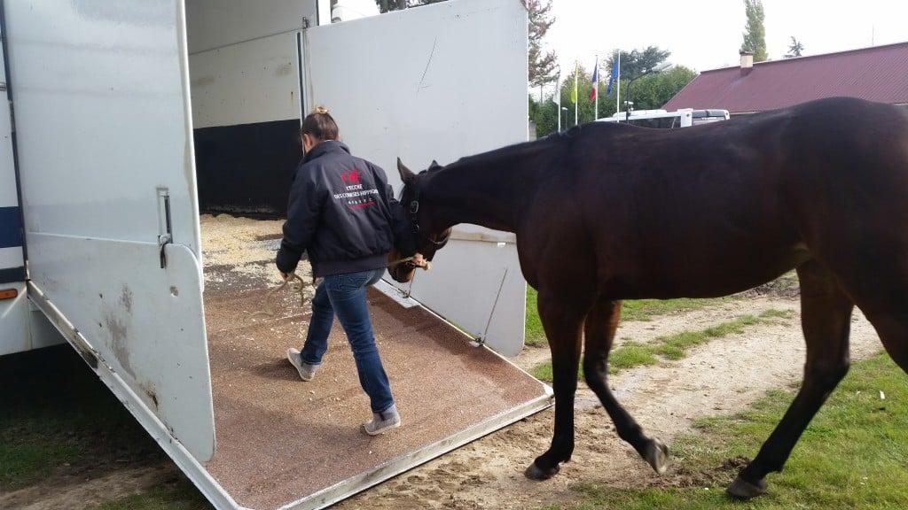 Le cheval doit rester attentif à la situation