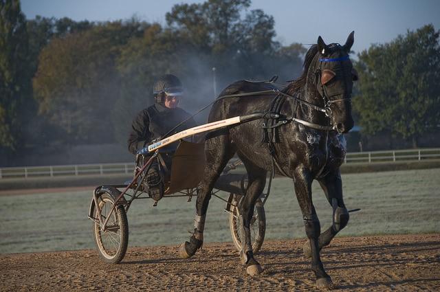 Très utilisée dans le milieu des courses, la récupération active mériterait d'être utilisée par les cavaliers classiques aussi
