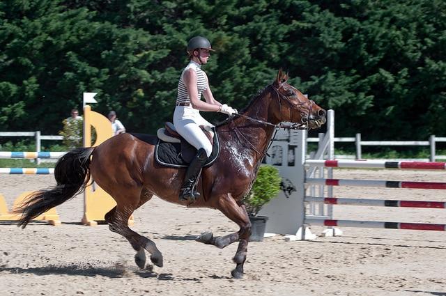 Ici la vitesse est soutenue mais le cheval se redresse et engage les postérieurs