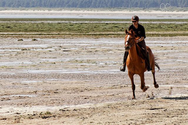 Laisser son cheval s'exprimer c'est aussi le respecter en tant qu'être vivant et savoir l'écouter... il vous en sera toujours reconnaissant...