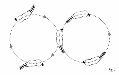 8 de chiffre avec incurvation et contre-incurvation